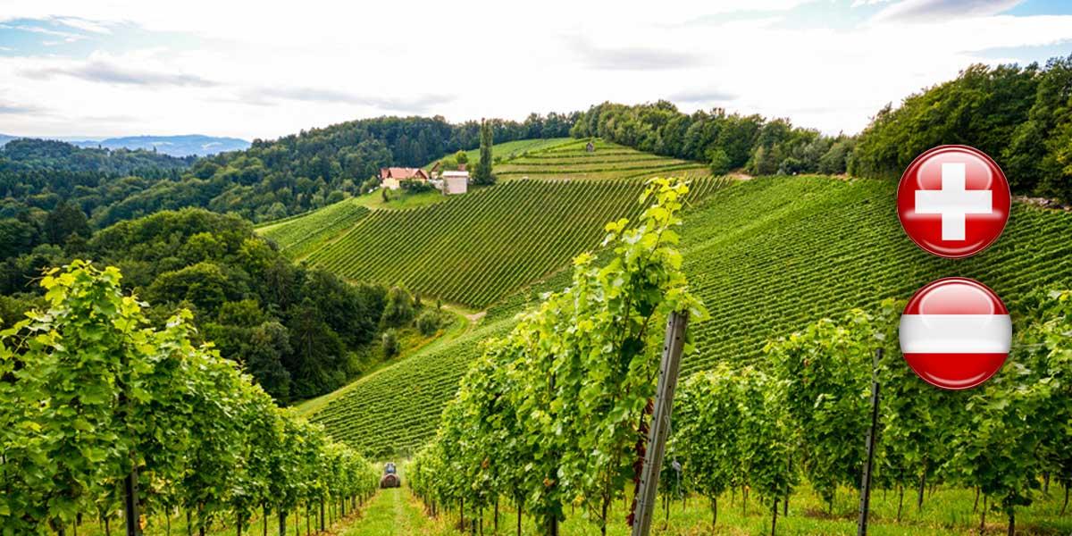 Weine aus Österreich & Schweiz