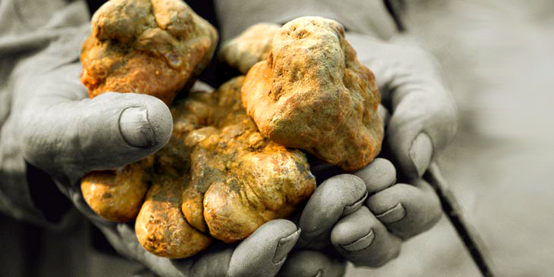 Trüffel & Pilze Frische Trüffel sowie auch eingelegte Trüffel finden Sie hier. Trockenpilze von 50g bis mehreren KG können Sie hier kaufen.