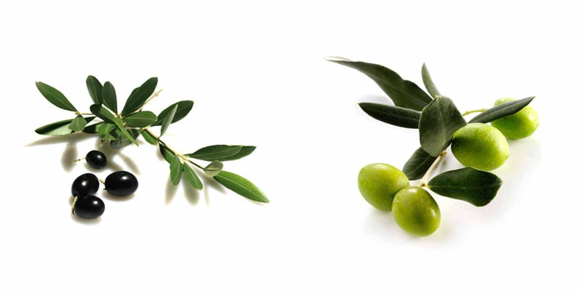 Oliven / Oliven Pasten grüne Oliven, schwarze Oliven, Kalamata Oliven, Olivencremes und viele weitere Olivenarten und Größen, etc.